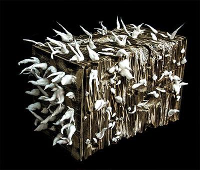 Mahdieh Abolhasan - Sculptor